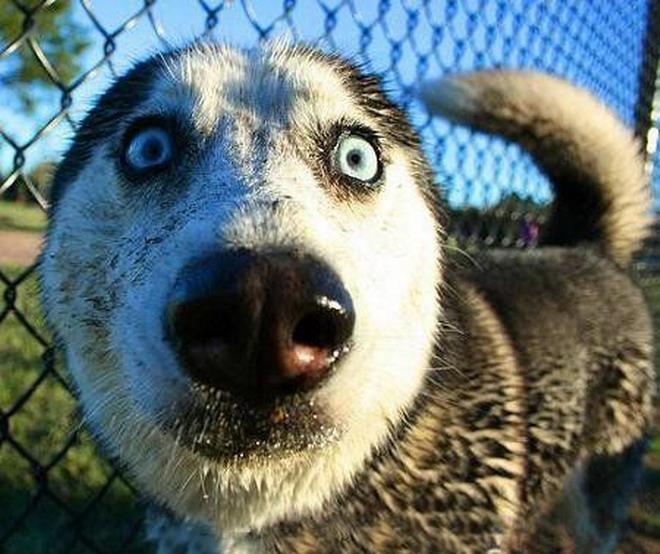 Crazy dogs! LOL! 110