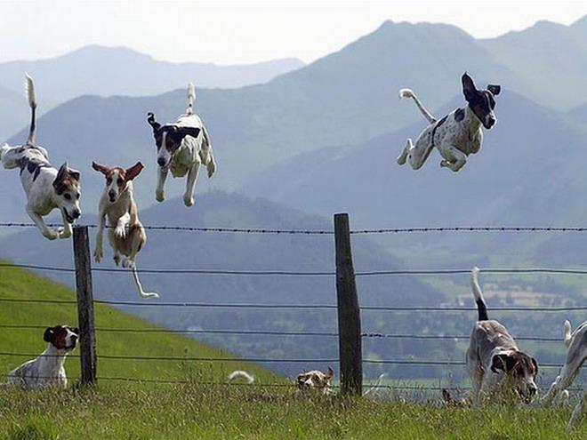 Crazy dogs! LOL! 410
