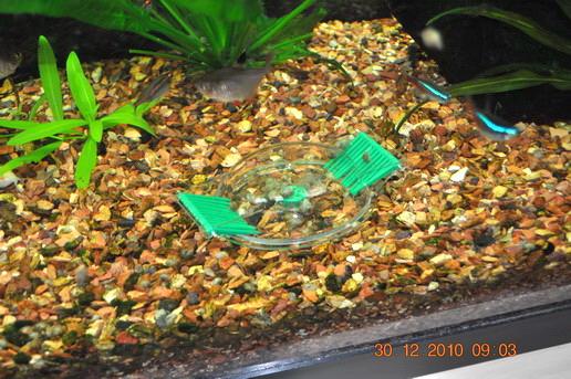 Trappe à escargots Limecollect de JBL Trappe10