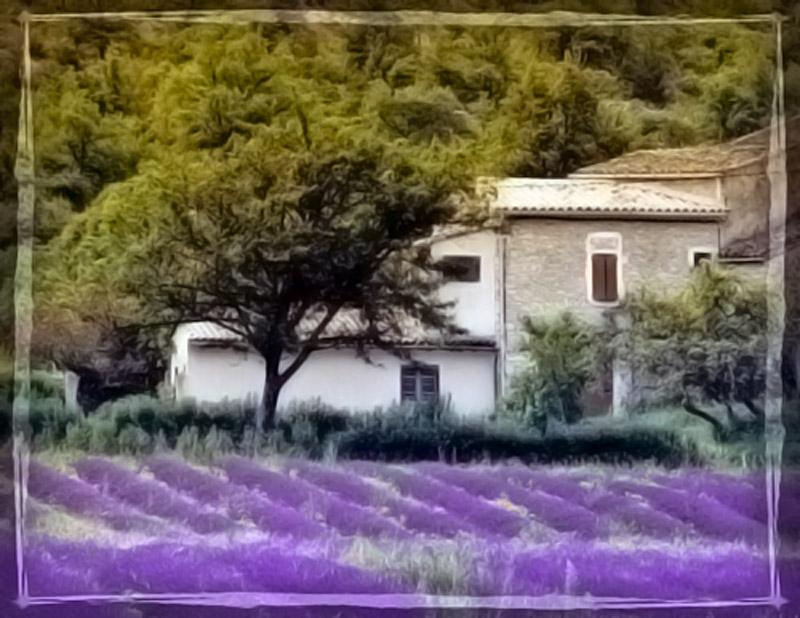 Лавандовая ферма бабушки Редбер 8f666010