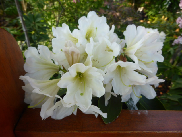 Brassées fleuries - Page 2 20-04-20