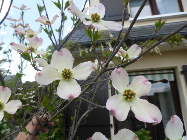 Brassées fleuries - Page 2 20-04-24