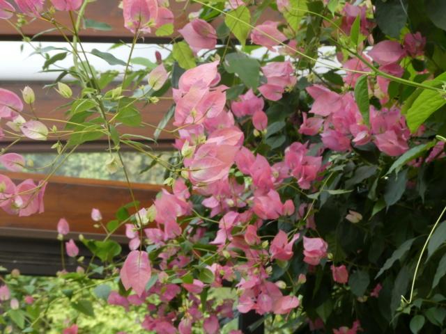Brumes de fleurs 22-10-19