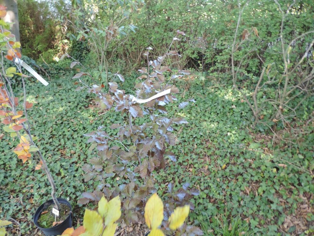 Foire aux plantes  27 - 28 septembre 2014  LA FEUILLERIE 20191484