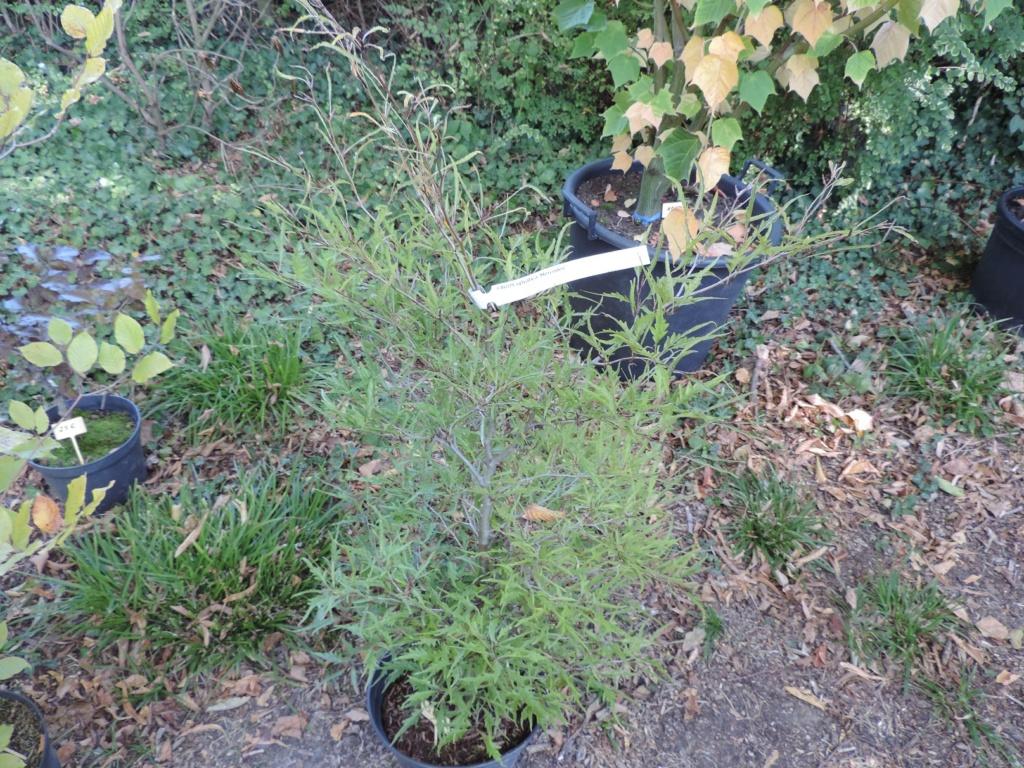 Foire aux plantes  27 - 28 septembre 2014  LA FEUILLERIE 20191490