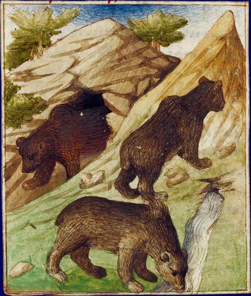 L'ours B_03_b10