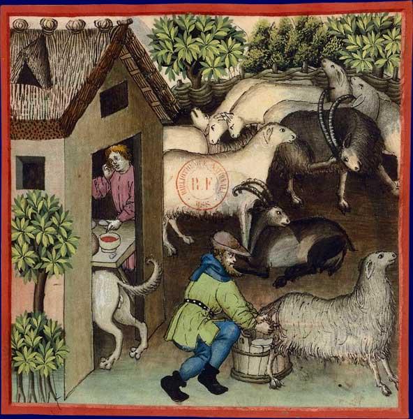 L'agneau M_3310