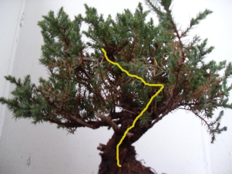 Styling help please (san jose juniper) Sanjos11