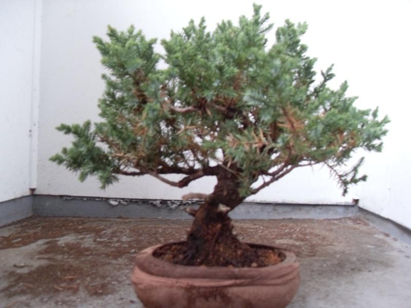 Styling help please (san jose juniper) Sdc12010