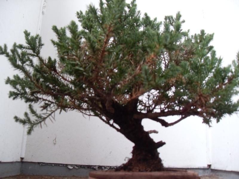 Styling help please (san jose juniper) Sdc12110