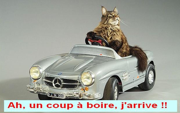 JOYEUX ANNIVERSAIRE LA BARONNE !! - Page 2 Cat_to10