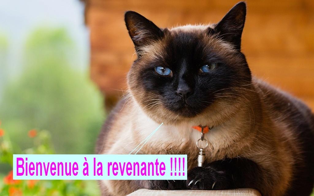 Une revenante ... Cats_s11