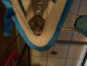 Petit rongeur (rat ?) à sauver - Page 2 Receiv12
