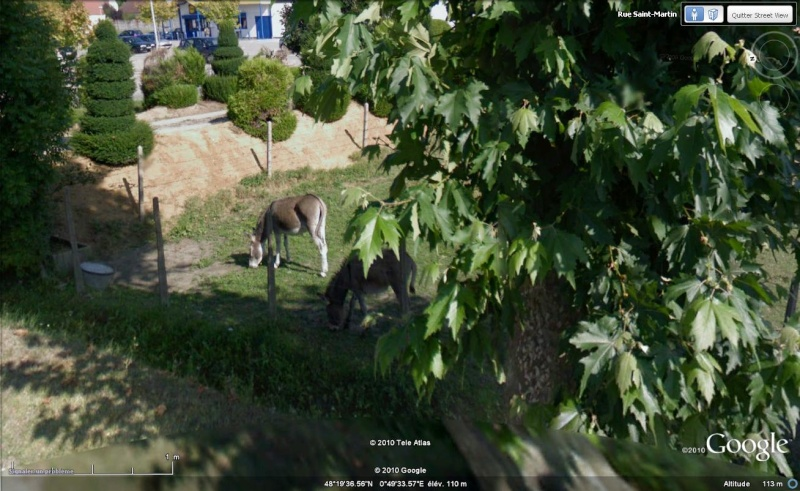 STREET VIEW : Les animaux - Page 5 Anes10