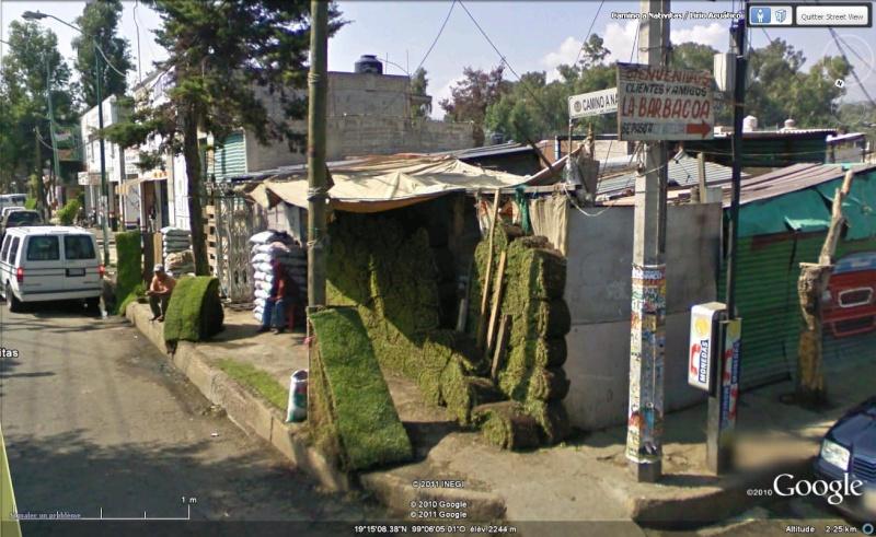 Street view : un peu d'herbe ?  Xochimilco, Mexique, Amérique du Sud Herbe10