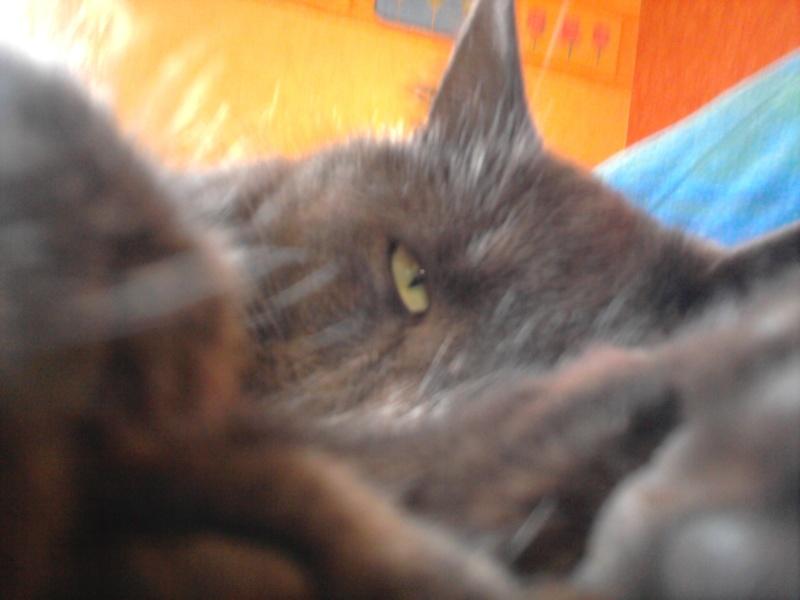 Nos amis les animaux :) Photo111