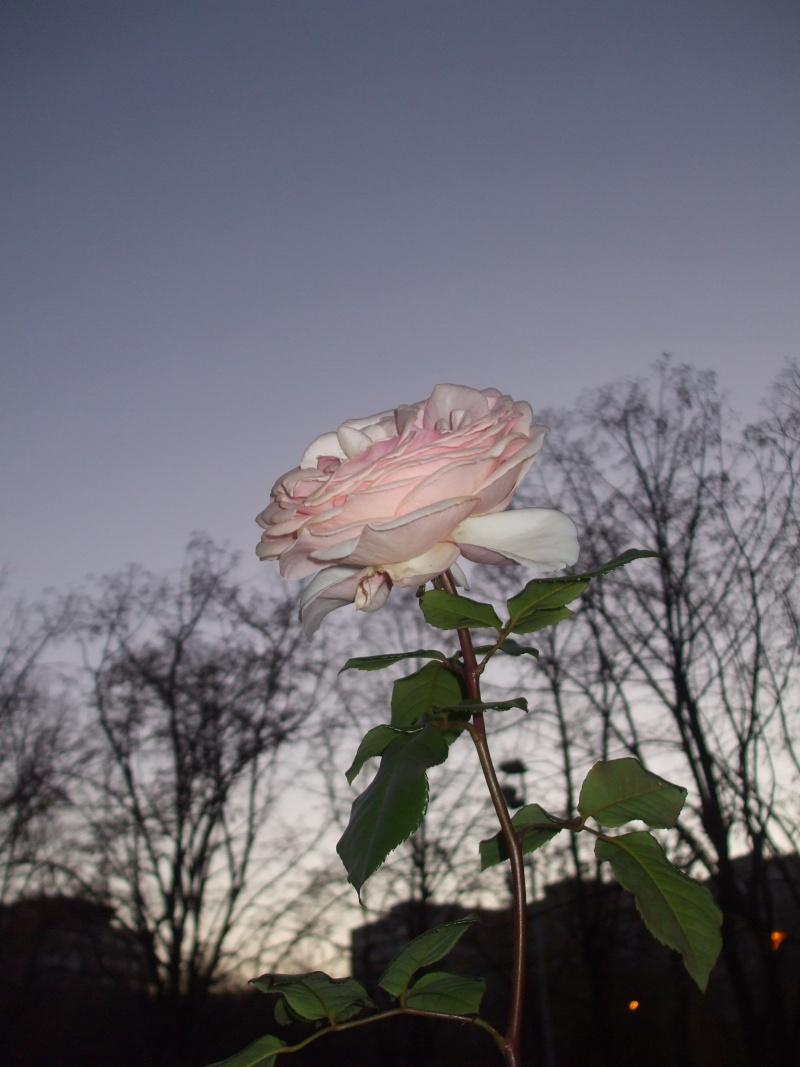 Floraisons de novembre - Page 2 Copy_o11