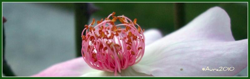 floraisons macro Da10