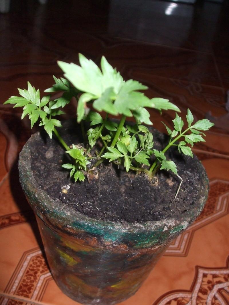 J'ai planté.....dans mon potager Dscf2517