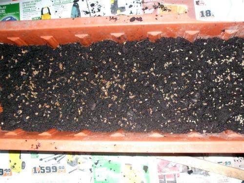 J'ai planté.....dans mon potager Dscf3013