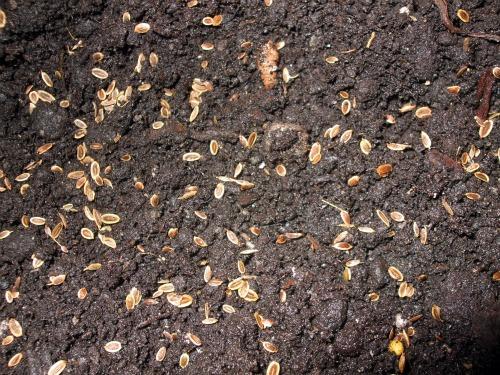J'ai planté.....dans mon potager Dscf3014