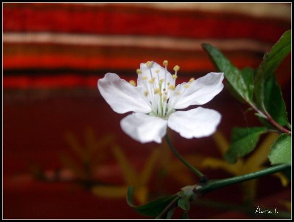 Floraisons du mois d'avril Dscf3111