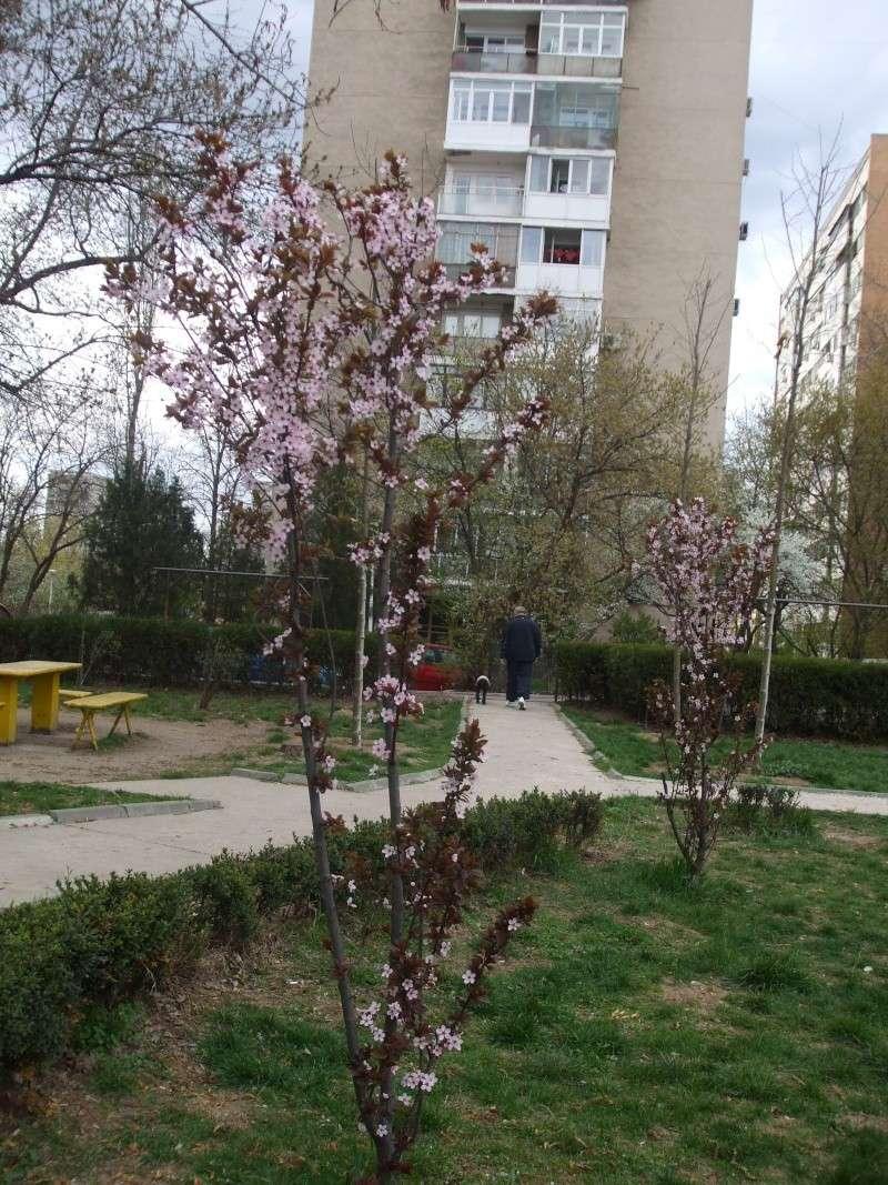 floraisons des arbres et des arbustes - Page 2 Dscf3218