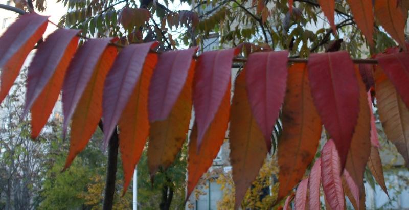Floraisons de novembre Dscf4512