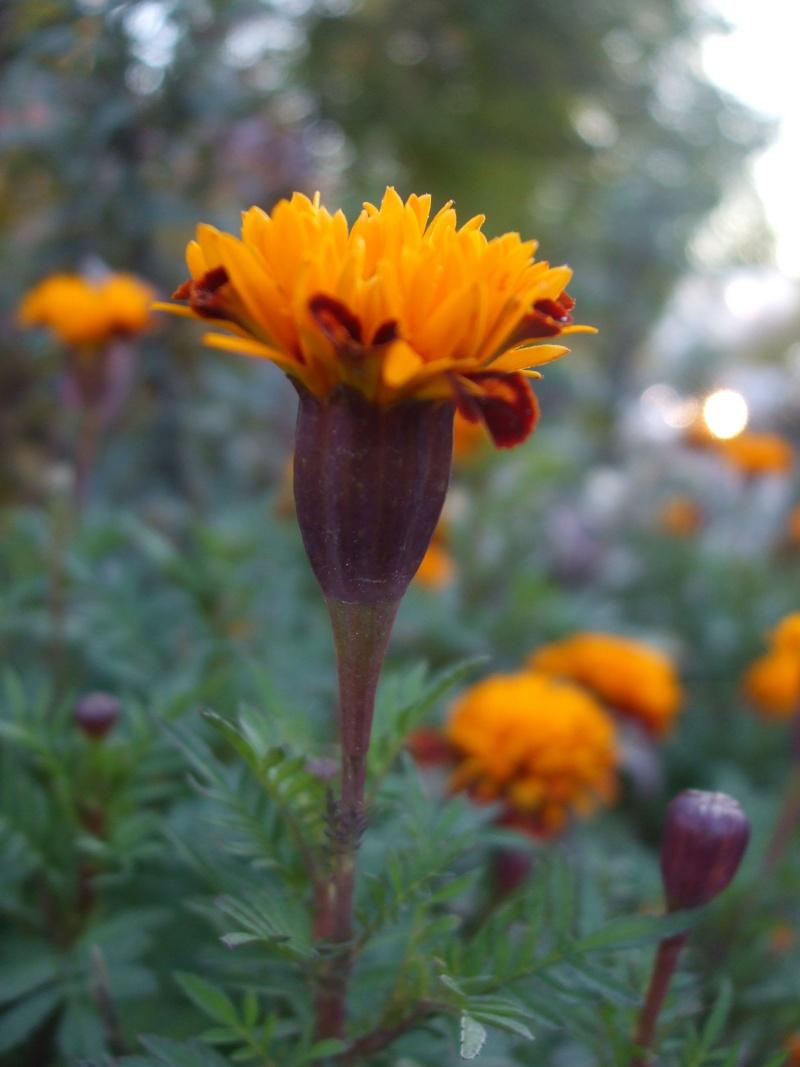 Floraisons de novembre Dscf4513