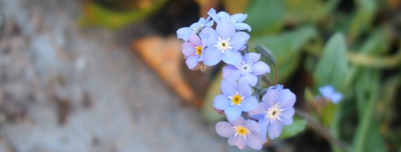 Floraisons de novembre Dscf4618