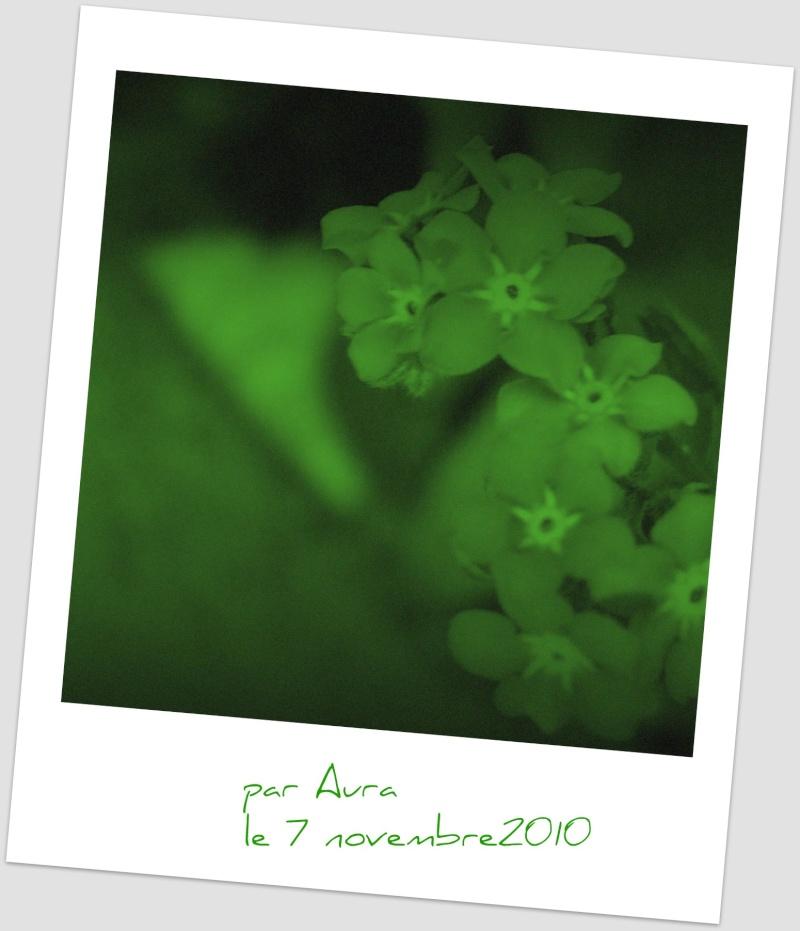 Floraisons de novembre Dscf4619
