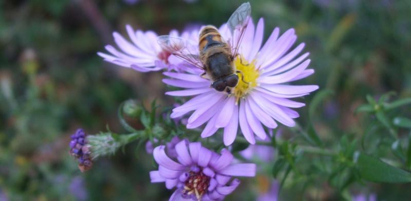Floraisons de novembre Dscf4622