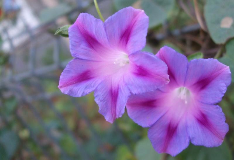 Floraisons de novembre Dscf4810