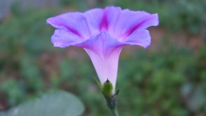 Floraisons de novembre Dscf4811