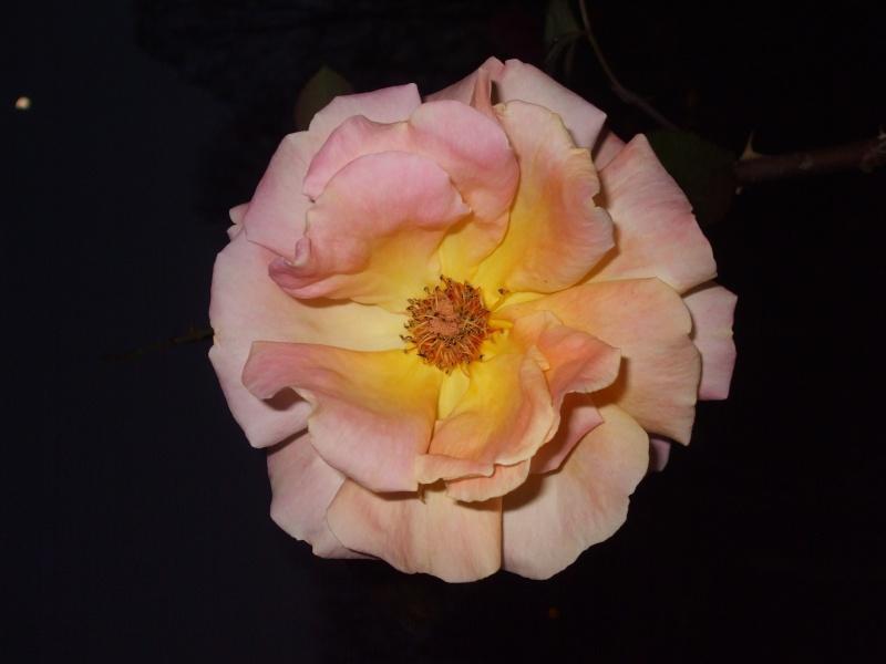 Floraisons de novembre - Page 2 Dscf4912
