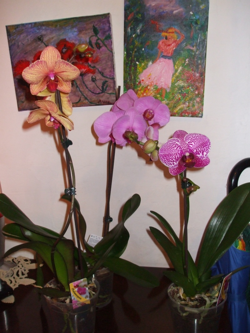 floraisons des orchidées - Page 3 Dscf7510