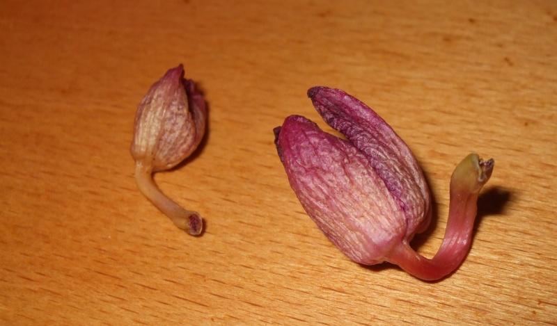 mon orchidée est malade ? Dscf8010