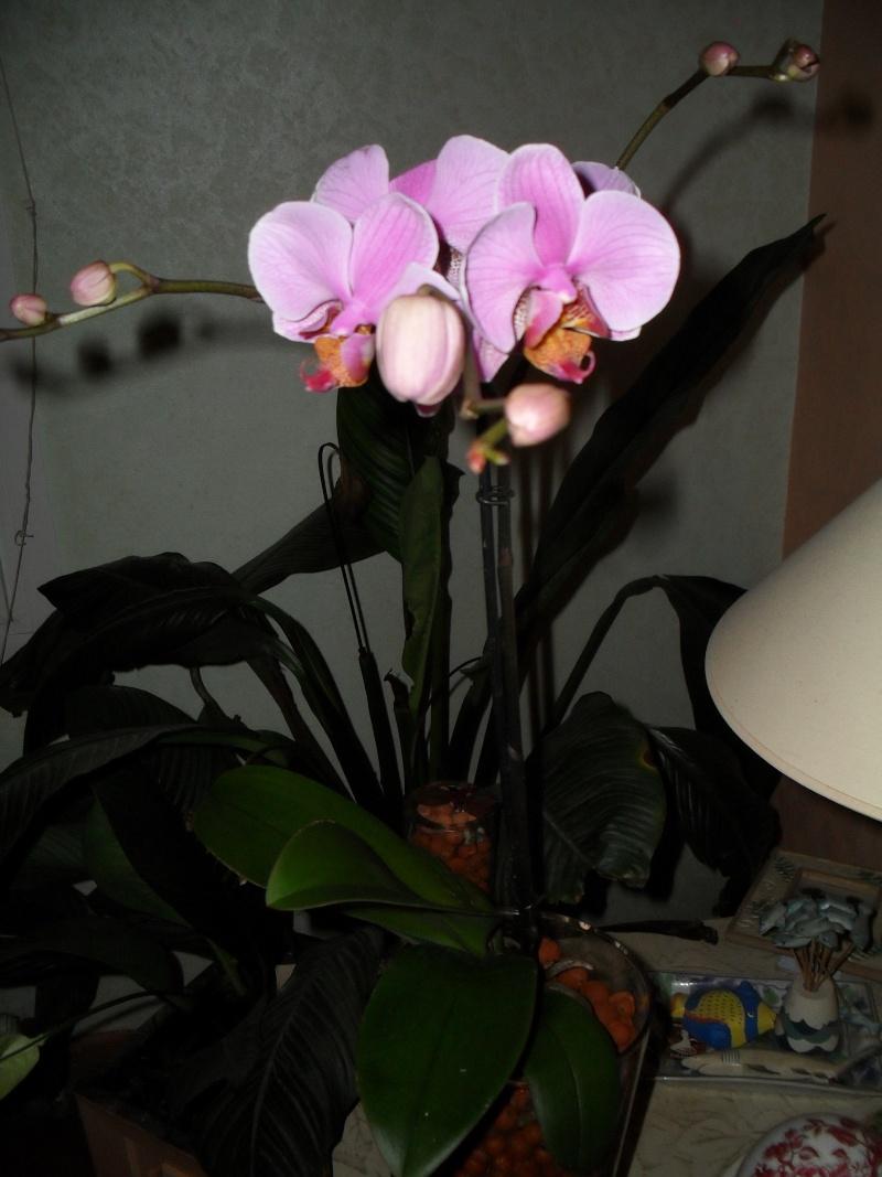 floraisons des orchidées - Page 2 00113