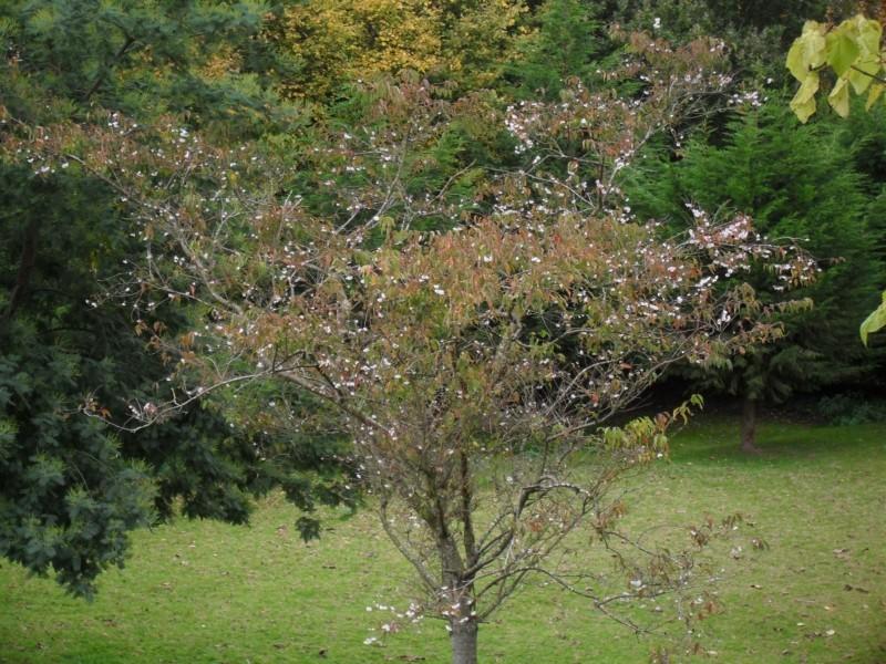 Floraisons de novembre 001_8010
