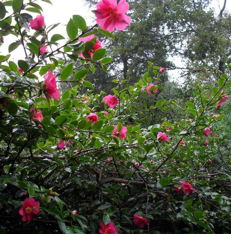 Floraisons de novembre 00210
