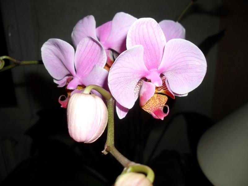 floraisons des orchidées - Page 2 00215