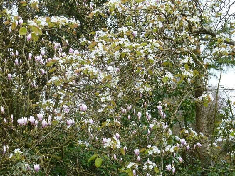 floraisons des arbres et des arbustes 00319