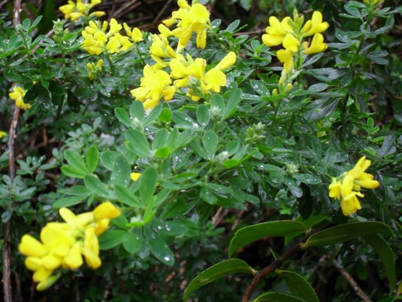 Floraisons de novembre 00410