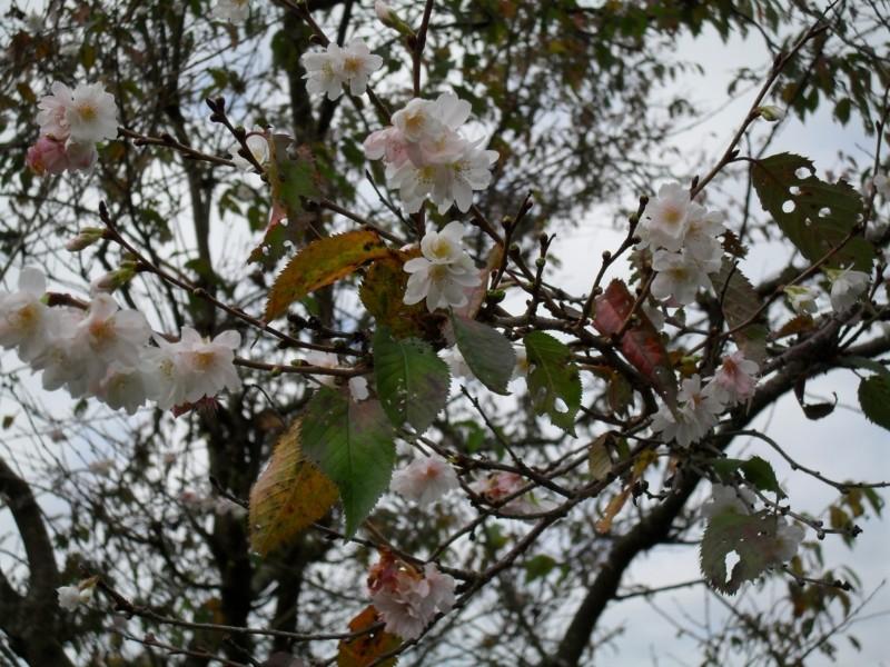 Floraisons de novembre 004_8010