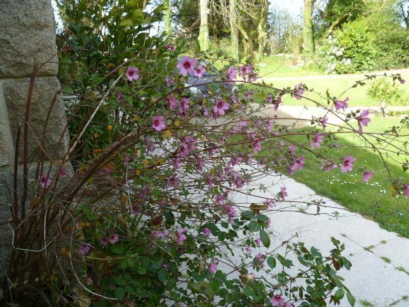 floraisons des arbres et des arbustes - Page 2 00618