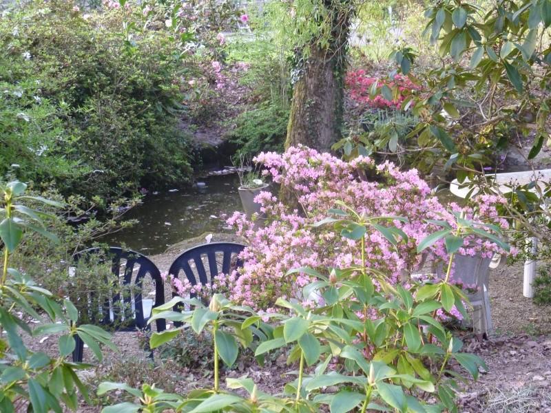 Aperçus de mon jardin Breton 00619