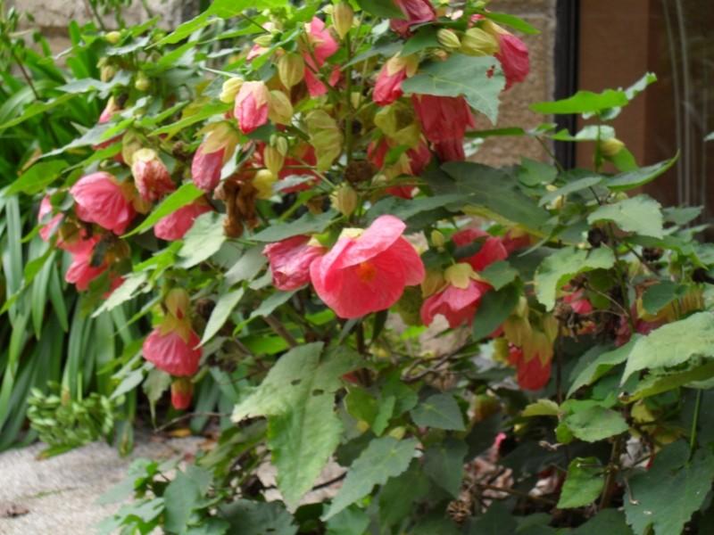 Floraisons de novembre 007_8010