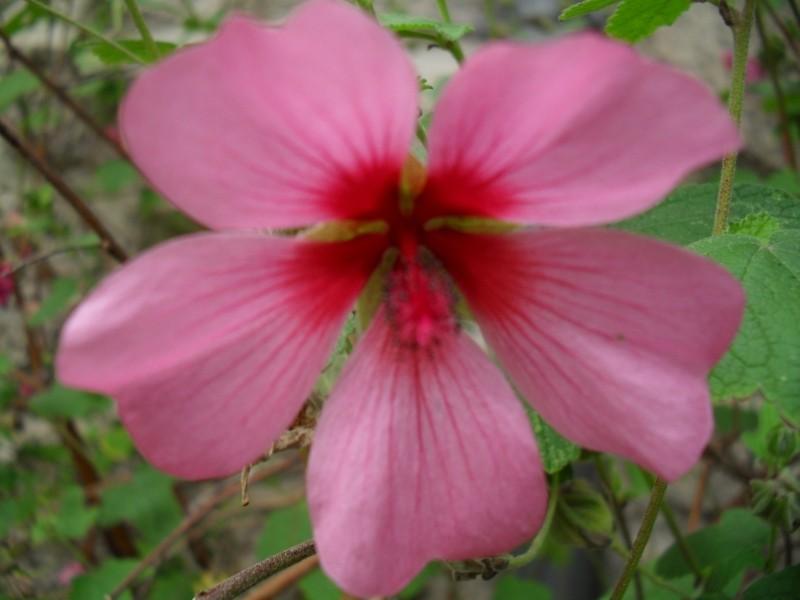 Floraisons de novembre 009_8010