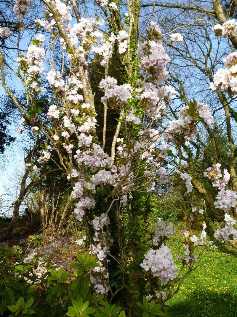 floraisons des arbres et des arbustes - Page 2 01014