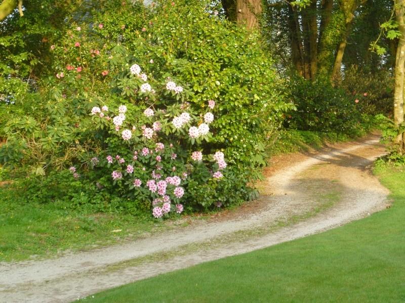 Aperçus de mon jardin Breton 01315